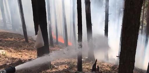 Li Sariqamîşê agir bi daristanê ket