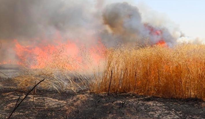 Kerkük'te Kürt çiftçilerin onlarca arazileri yakıldı